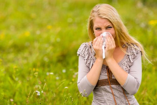 Rhume des foins Fièvre des foinsAvec le rhume des foins ou la pollinose, votre mécanisme de défense s'énerve au contact du pollen. Vous recevrez alors une réaction allergique. Le rhume des foins n'est provoqué que par le pollen qui se propage par le vent. Lorsque le pollen frappe votre membrane muqueuse, votre corps produit des anticorps. La prochaine fois que le pollen entre en contact avec votre muqueuse, votre corps réagit de manière excessive. Il ne produit pas seulement des anticorps maintenant, mais libère de l'histamine. La réponse immunitaire des personnes atteintes du rhume des foins est donc trop forte. L'histamine dilate les vaisseaux sanguins, libérant un excès de liquide. Vos membranes muqueuses sont stimulées, après quoi elles gonflent et produisent encore plus de mucus. En Europe occidentale, 10 à 20% des personnes souffrent du rhume des foins. Heureusement, pas tous dans la même mesure et pas pour tous les types de pollen. Le nom rhume des foins fait référence au moment où la plupart des gens souffrent de la maladie, à savoir le fort été, pendant la saison des foins. C'est une maladie saisonnière. La condition n'est pas nuisible du tout, mais les symptômes sont très ennuyeux. Selon le pollen auquel vous êtes allergique, vos symptômes peuvent apparaître entre janvier et septembre. Si vous êtes allergique au pollen d'arbre, vous aurez le rhume des foins en février et en mars, tandis que les personnes allergiques au gazon ne présenteront aucun symptôme avant mai et juin. C'est bien sûr plus difficile si vous êtes également allergique aux plantes d'intérieur. Ils sont à la maison ou au bureau pendant toute une année. On pense que vous êtes né avec une prédisposition à développer le rhume des foins. La maladie se manifeste habituellement pour la première fois entre 8 e et 25 e anniversaire. Elle s'accumule lentement et peut s'aggraver chaque année. Heureusement , elle prend après avoir 40 e repartons et contre vous de 55 ans, les chances sont que vous ave